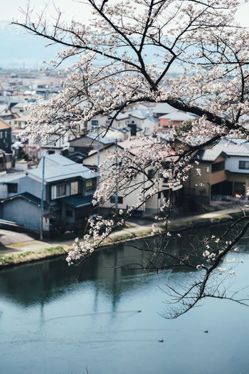 Sakura Built Structure Building Exterior Architecture Tree Water Plant Building Nature Day Flower Growth Branch Flowering Plant Blossom Residential District City Springtime Reflection House No People Outdoors Cherry Blossom Cherry Tree Canal Sakura