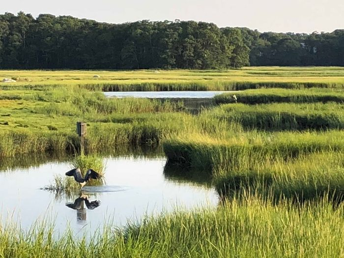 Natural wildlife Plant Water Grass Lake Scenics - Nature Beauty In Nature Animal Themes