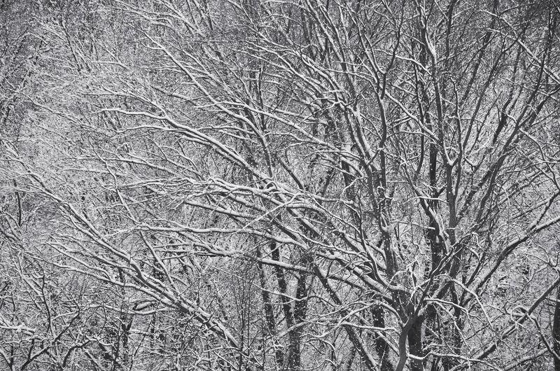 Full frame shot of bare tree during winter