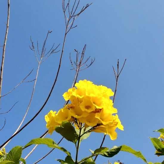 India Flower Bunch Bunch EyeEmNewHere EyeEm Nature Lover Flower Head Flower Yellow Blue Clear Sky Petal Sky Close-up Plant Bundle Plant Life Botany Wildflower