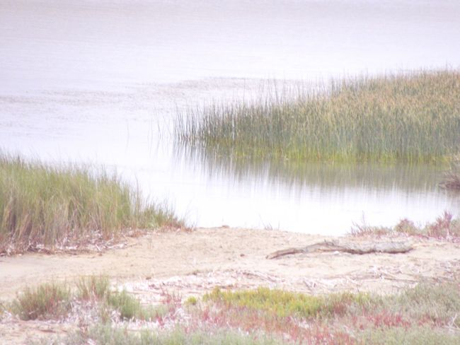 Blur Nature Grass Water Tranquil Scene Tranquility Beauty In Nature Scenics Outdoors Beach No People Sea Day Growth Wetland Marram Grass Marsh Sky Impressionism Lake