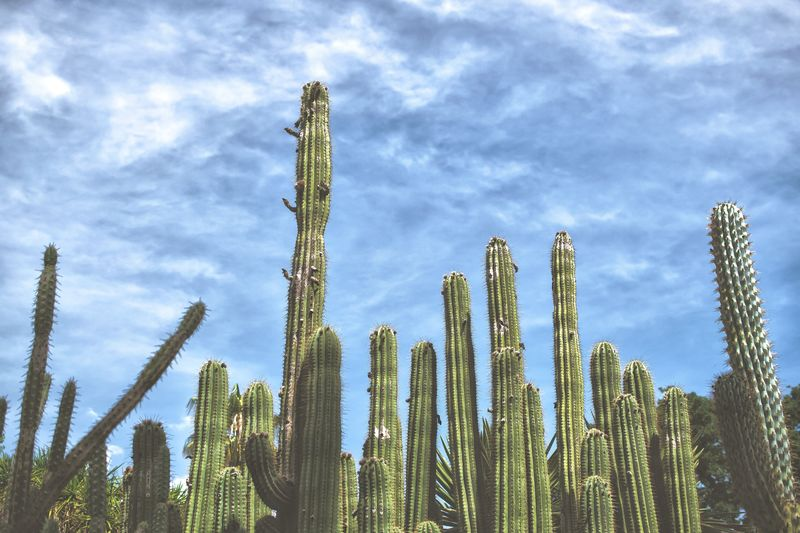 Low Angle View Growth Beauty In Nature Details Faded Scenics EyeEmNewHere València Backgrounds Wildlife Transportation Tranquility Cloud - Sky Nature Cactus Cactuslover Succulents SucculentsLover