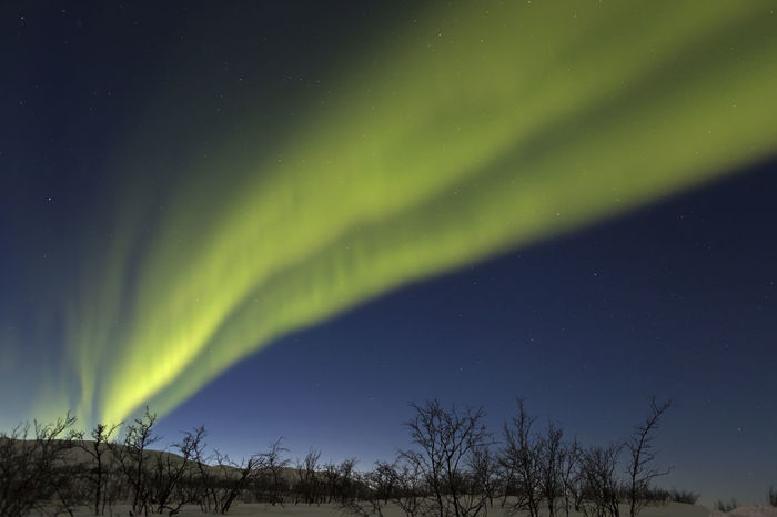 Aurora borealis, Polarlight Aurora Borealis Bushes And Trees Green Norway🇳🇴 Scandinavia Winter Night Polarlight Stars