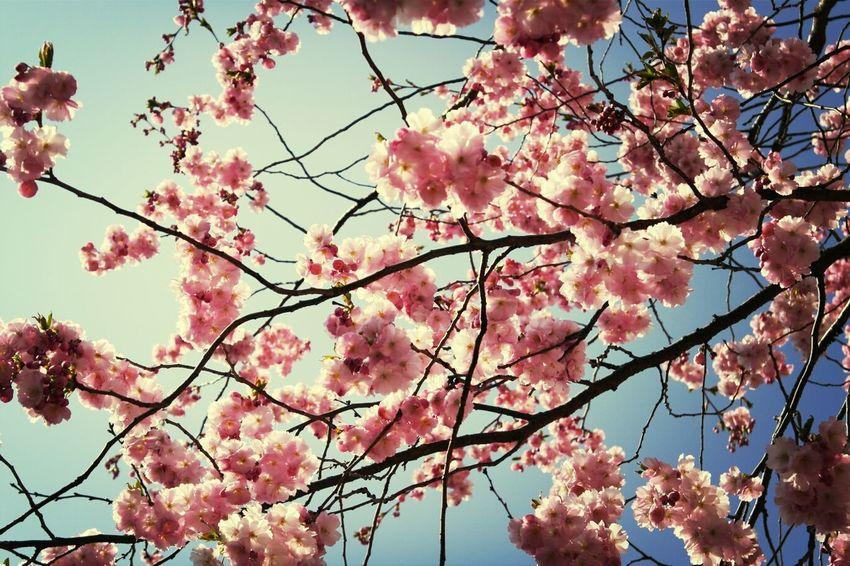 Hugging A Tree Summertime Flowers Oneofthosedays