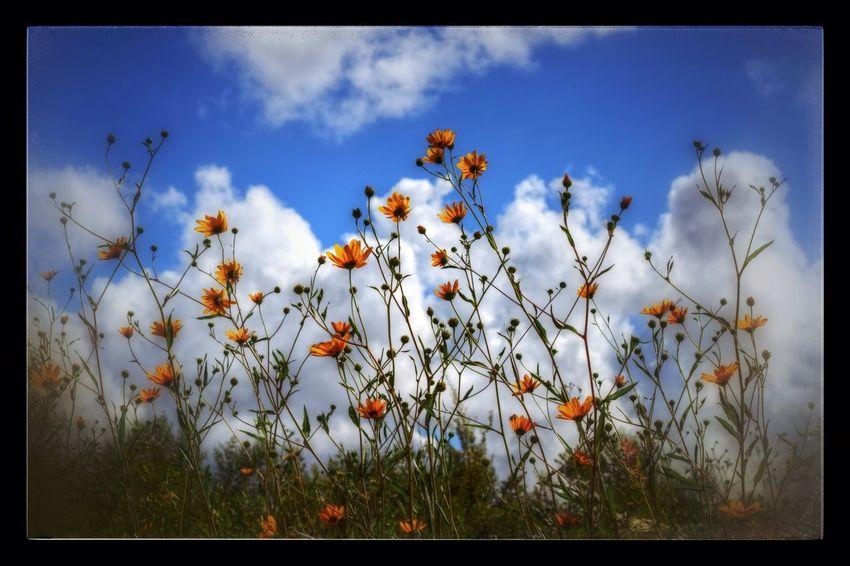 EyeEm Nature Lover Tadaa Community Snapseed Flowers