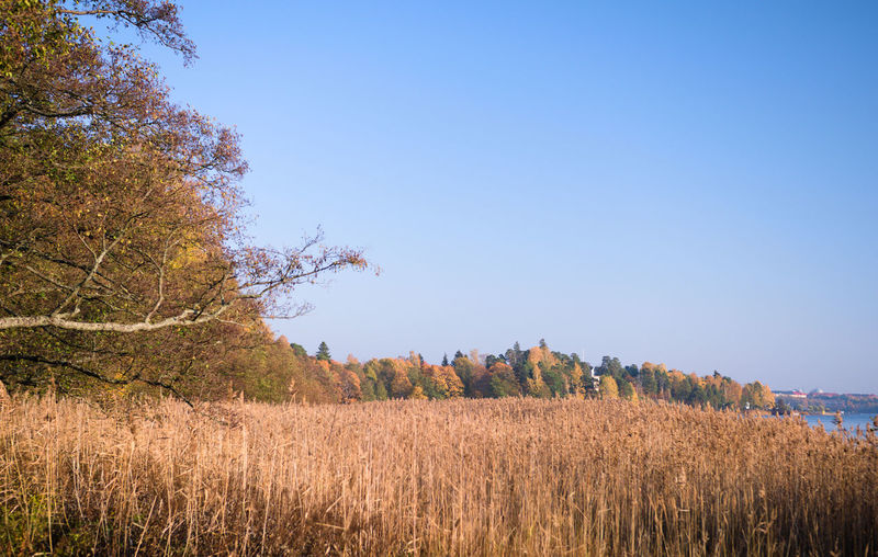Seurasaari strait, Helsinki Scenics - Nature Tranquility Calming Calm Environment Change No People City Forest Tree Sky Copy Space Day Helsinki Finland Clear Sky Beauty In Nature Focus On Background Landscape Outdoors Nature Reed - Grass Family Autumn Lake Gh5
