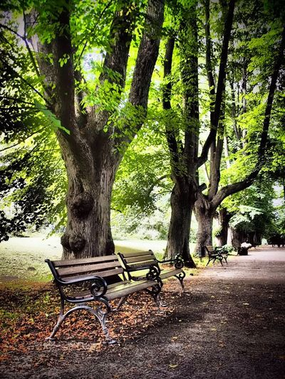 Park mit Bänken Park Tree Tree Trunk Day Growth Nature Outdoors No People Beauty In Nature