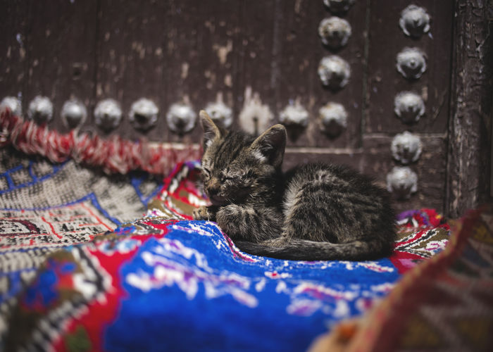 "little cat sleeping on the streets of the medine of Chefchaouen, Morroco ""Blue City"" Africa Blue City Carpet Cat Cat Baby Cats Cats Of EyeEm Catsofinstagram Catsoftheworld Chefchaouen Chefchaouen Medina Chefchauen Medina Morroco Morrocobeauty Nature No People Sleep Sleeping Sleeping Cat Street Style Life Travel Travel Photography Traveling"
