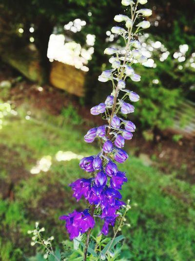 Flower Flower Head Purple Close-up Plant