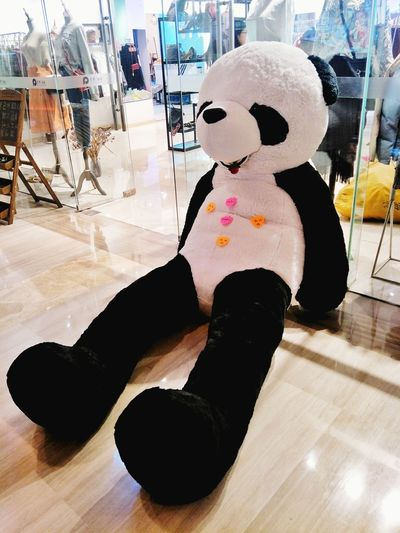 Panda Pandas♥