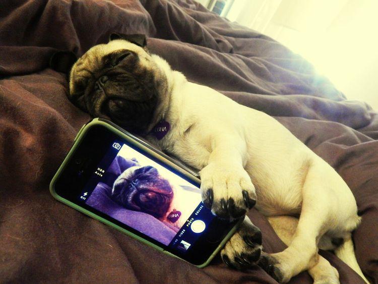 Selfie Selfiedog Pretty Sleeping Enjoying Life Relaxing Relaxing 😊