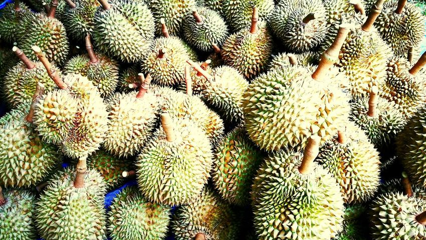 Durian fruit Nature Plant Backgrounds Needle - Plant Part Outdoors Freshness Tree Fruits Sale Economics Traditional Thailand Tasty Good Smelling Smell Eating Healthy Full Frame Growth Day No People Beauty In Nature Close-up