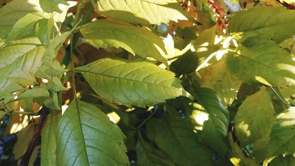 Backgrounds Full Frame First Eyeem Photo Citrus Fruit Herb Outdoors