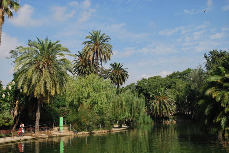 Barcelona Barcelona, Spain Beauty In Nature Catalonia Catalunya Day Garden Green Growth Lake Men Nature Outdoors Palm Tree Real People Scenics Sky SPAIN Tranquil Scene Tranquility Tree Trees Tropical Climate Water