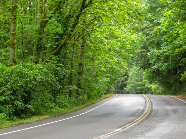 Headed south on Iron Mountain Blvd Pacific Northwest  Country Road Background Journey Curved Road EyeEmNewHere Freedom Horizontal Road Tranquility Travel Trip Carefree Escape Forest Road Getaway  Highway Journey Lush Foliage Mountain Road No People Road Trip Scenic Drive Summer Winding Road