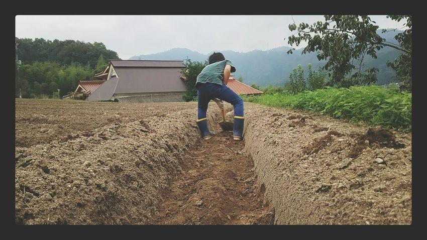 ポテト研究会。芋植え開始 じゃがいも植え 畑仕事