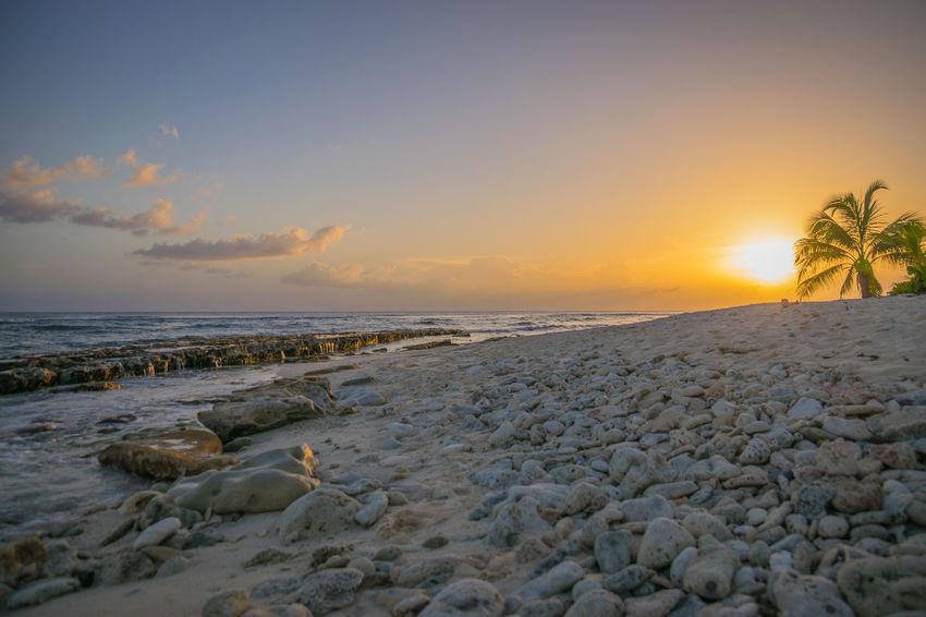Enjoying The Sun Landscape Sunset Beach