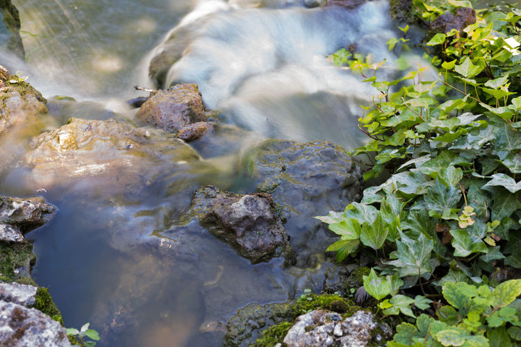 Creek Flowing Flowing Water Beauty In Nature Blurred Motion Close-up Day Fresh High Angle View Ivy Long Exposure Motion Nature Outdoors Power In Nature Rock - Object Scenics Standing Water Stream Water Water Flow Waterfall