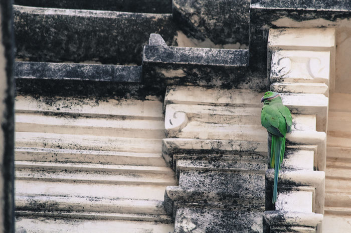 Bird Bird Photography Close-up Contrasting Colors Day High Angle View Old Structure Outdoor Photography Parrot Structure Temple Wall