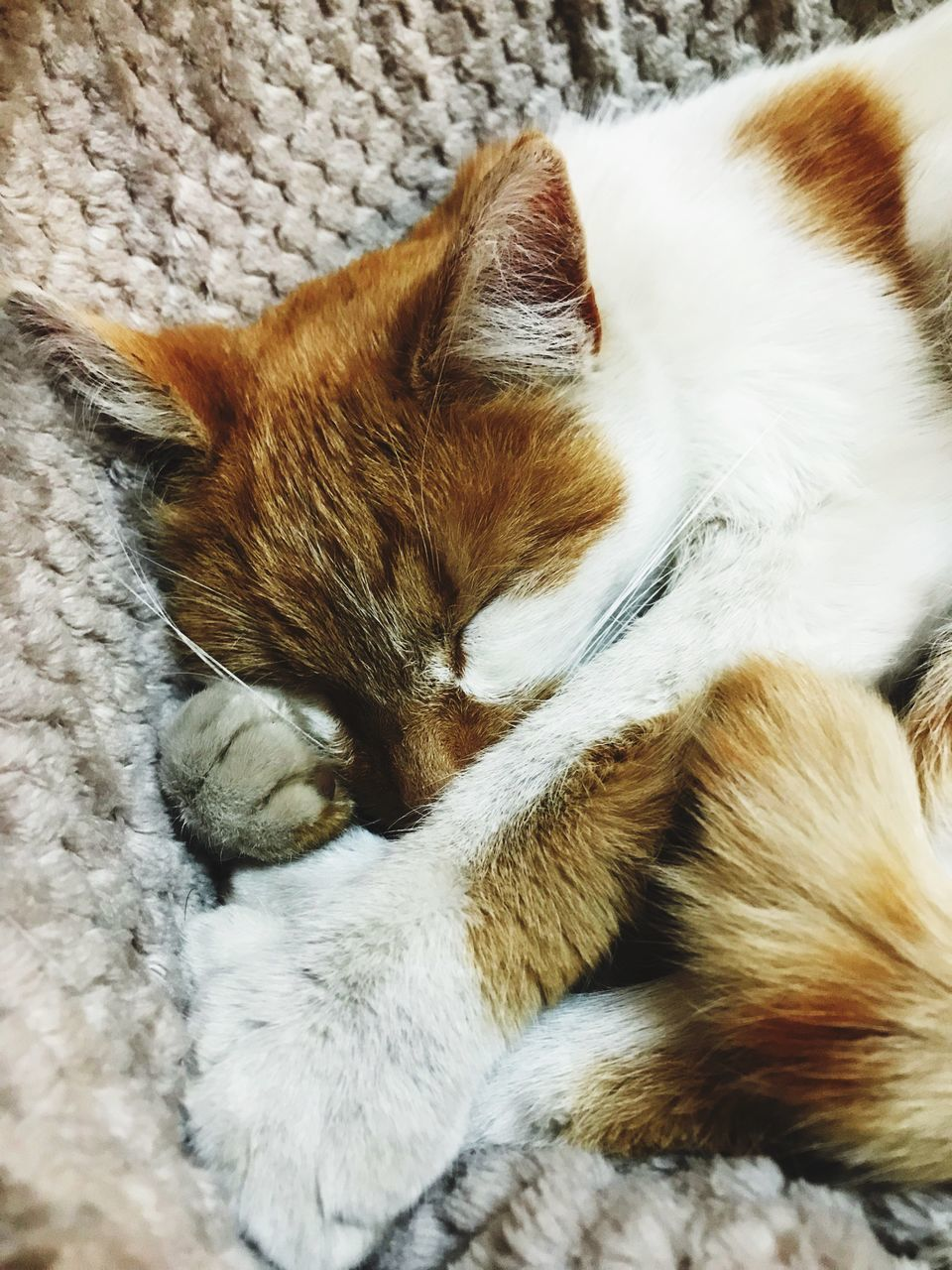 domestic cat, cat, domestic, feline, mammal, domestic animals, pets, animal themes, animal, one animal, vertebrate, relaxation, sleeping, eyes closed, resting, no people, indoors, lying down, close-up, high angle view, whisker, napping