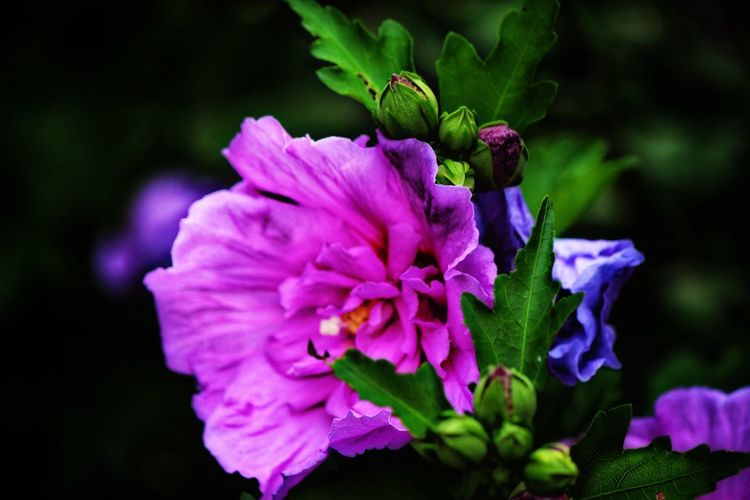 Flowering Plant Flower Fragility Vulnerability  Petal Freshness Beauty In Nature Animal Themes Animal Day Pink Color One Animal Inflorescence Animals In The Wild Animal Wildlife Flower Head Close-up Insect Growth Plant