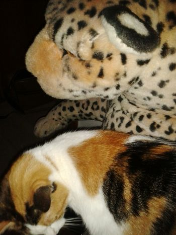 Meine Katze lilli💋 Bei Mir Zu Hause Catoftheday Glückskatze