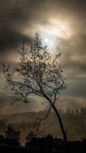 Foggy Morning Justshoot Myterious Fable Switzerland Freelancer Tree My Favorite Photo