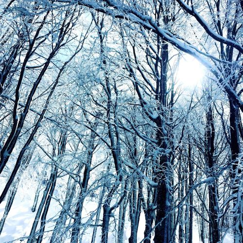 Snow ❄ Low Angle View Tree Branch Beauty In Nature Nature Backgrounds Day No People Outdoors
