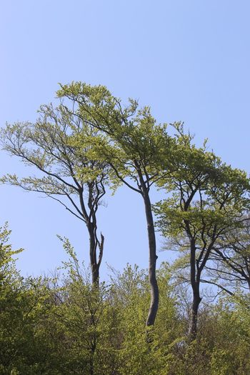 On the coast Plant Tree Sky Low Angle View Growth Clear Sky Nature Scenics - Nature
