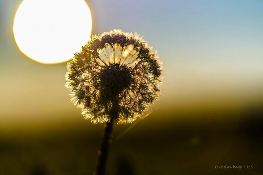 Check This Out Hanging Out Hello World Relaxing Taking Photos Dewdrops_Beauty Good Morning Hello World Morning Dew That's Me Hi! Flower Collection