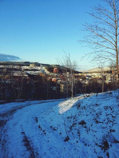Winterland Snow