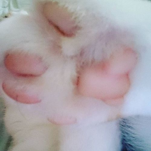 Teddypaw Highfive Catphoto Catmoment Catworld Catsofinstagram Instacat Worldofcats Thedailykitten Sweetmoment PetWorld Tinkerbell