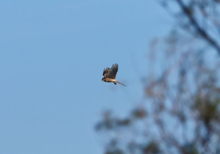 Low angle view of bird flying