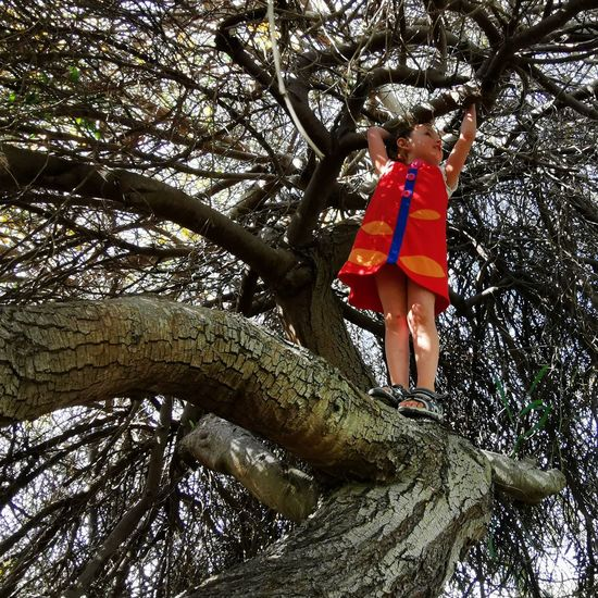 Low angle view of child on tree