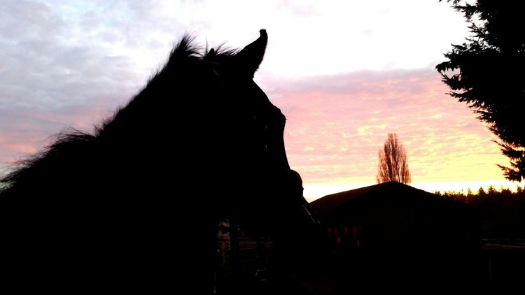 ~Find beauty in the little things of life~ This is by far my favourite place in the world💕 First Eyeem Photo Horse Horses Sunset Quoteoftheday Quote Arsty My Favourite Place Favouriteplaceonearth