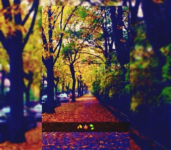 Autumn Autumn Colors Colors Colorful Pretty Check This Out Photography Snapchat Hello World Autumn Leaves ❤️🍂🍃🍁