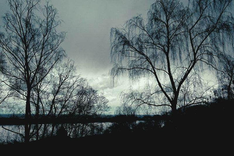 Mobilephotography Streetphotography Trees Silhouette River