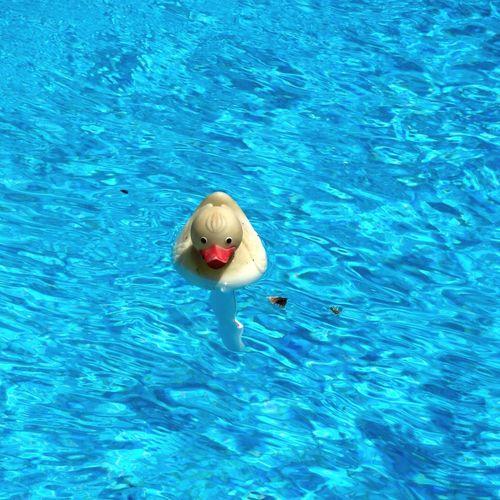 Spain Water Reflections Pool Swimming Pool Water Water_collection Summertime Summer Summer ☀ Quietscheente Quietscheentchen
