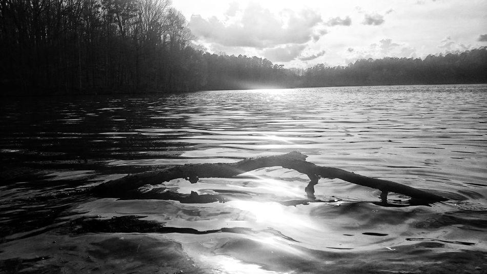 Lake Log Blackandwhite Black & White Black And White Tranquility