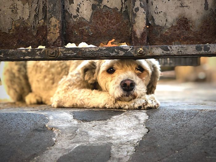 Close-up portrait of dog sitting on footpath