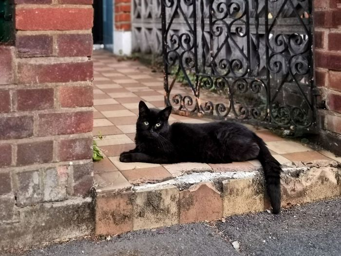 Portrait of black cat relaxing on brick wall