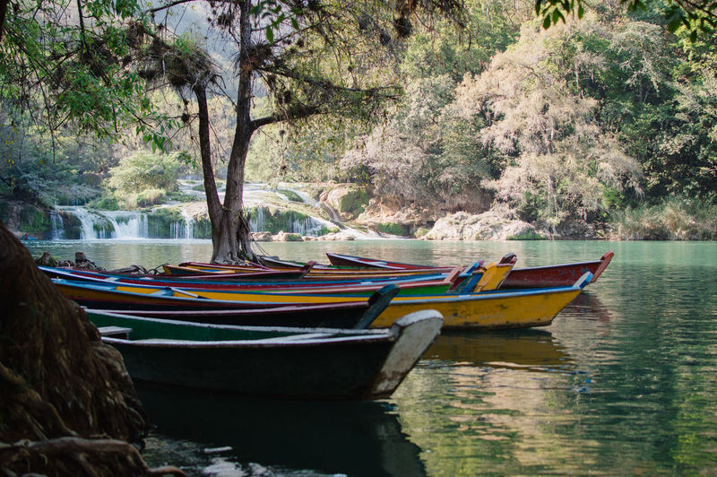 Boats moored in river against trees