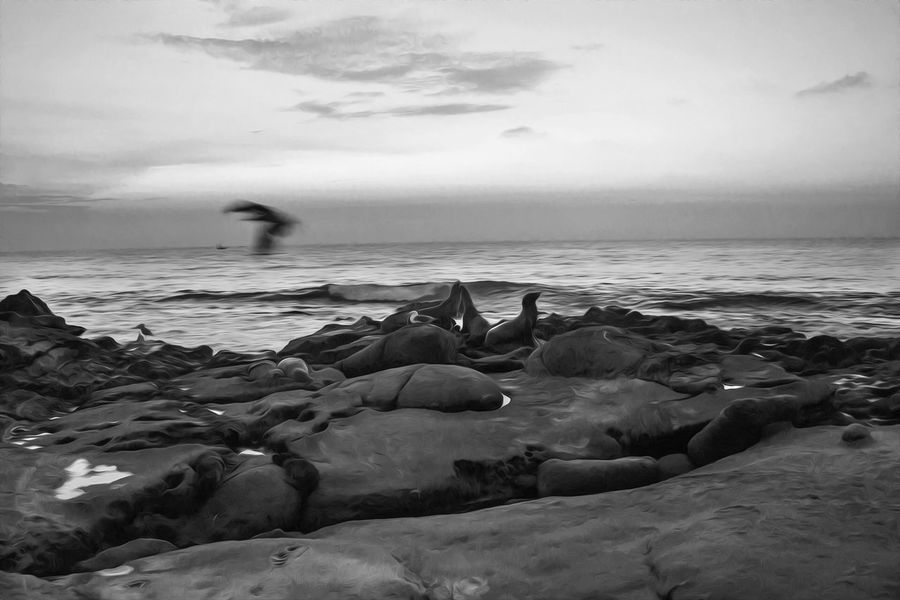 La Jolla Cove Water Beauty In Nature Nature Sky Scenics Sunset Outdoors Mammal Seals On Beach La Jolla Cove California Bnw_planet Bnw_collection Bnw Bnw_society