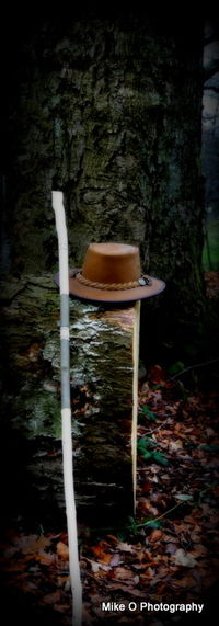 Day Forest Hat Nature No People Outdoors Tree Tree Trunk Walking Stick