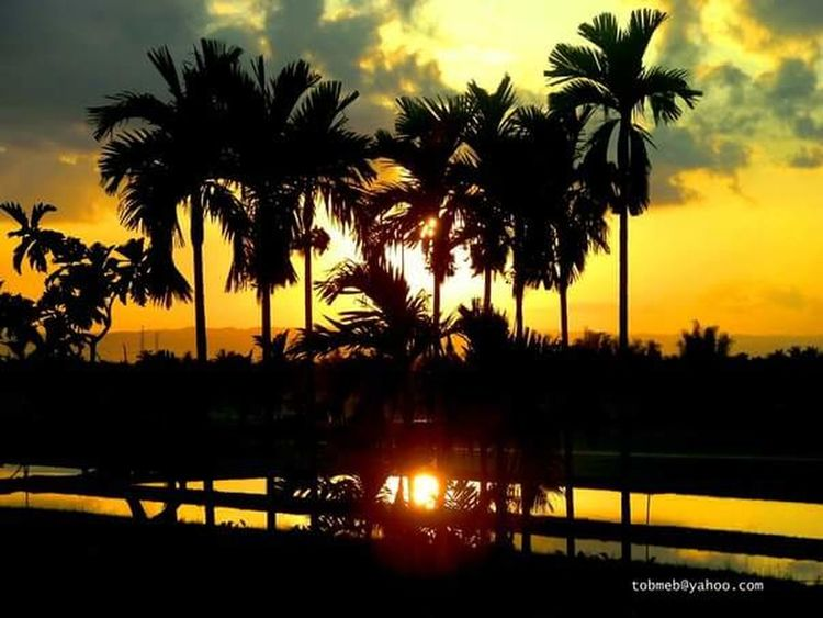 Palm Tree Sunset Reflection Outdoors Silhouette Nature Beauty In Nature Tranquility Water Tree