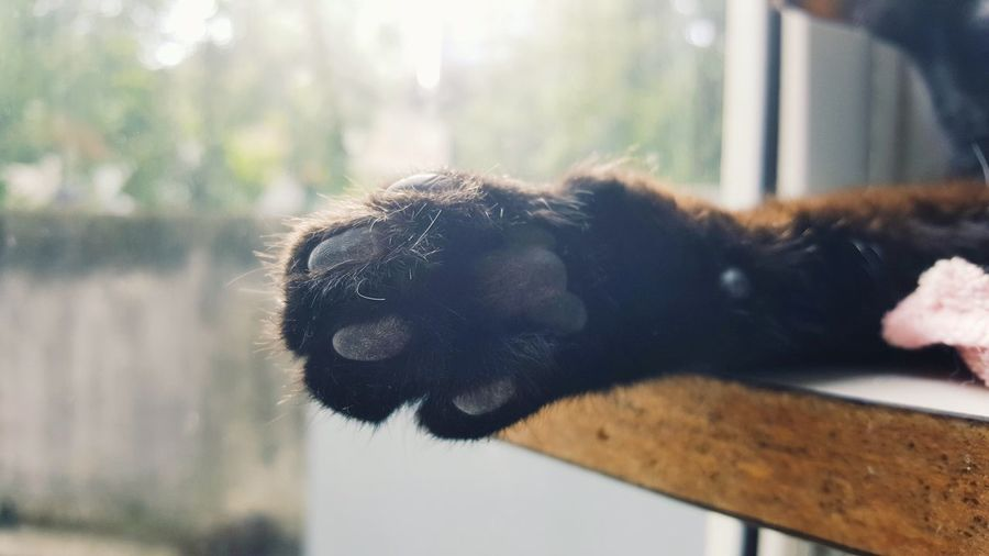 Animal Body Part One Animal Animal Animal Wildlife Mammal No People Outdoors Day Portrait Nature Close-up Animals In The Wild Food Ear Animal Themes Cats Kitty Cat BLackCat Paw Paws Sleepy Cat Place Of Heart