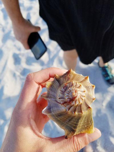 Looking down at a beautiful seashell