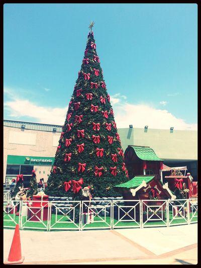 Festive Season Merry Christmas! Christmas Tree