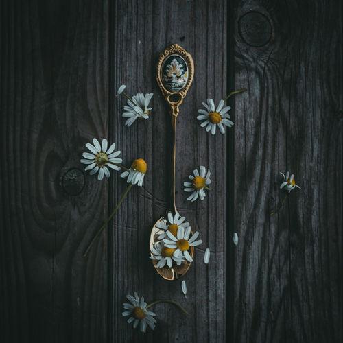 Close-up of flowers on wooden door