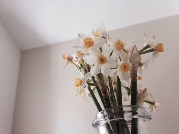 Flower Indoors  Vase No People White Background Close-up Fragility Freshness Flower Head Day
